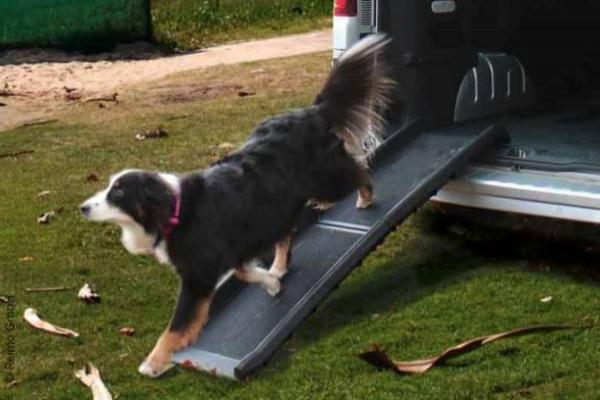 Rampa de coche Camp4 para perros